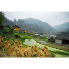 Xijiang Village Farms 2