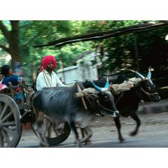 Gujarati Travel